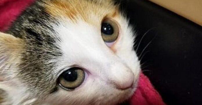 miracle gattina salva