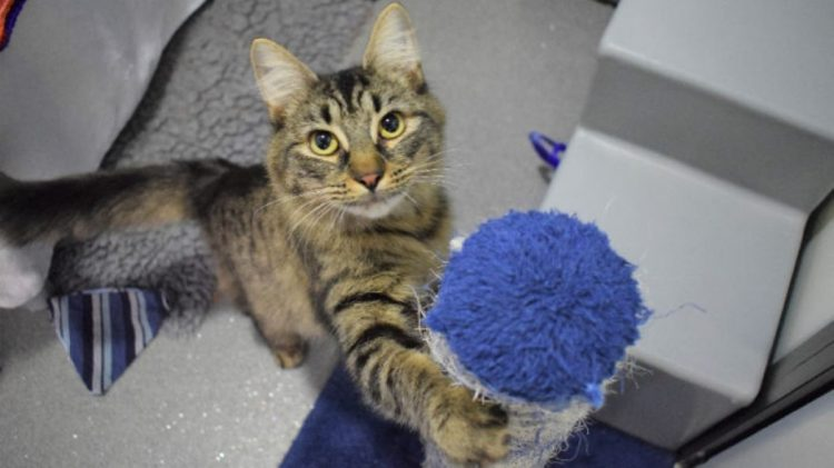 gattina gioco palla