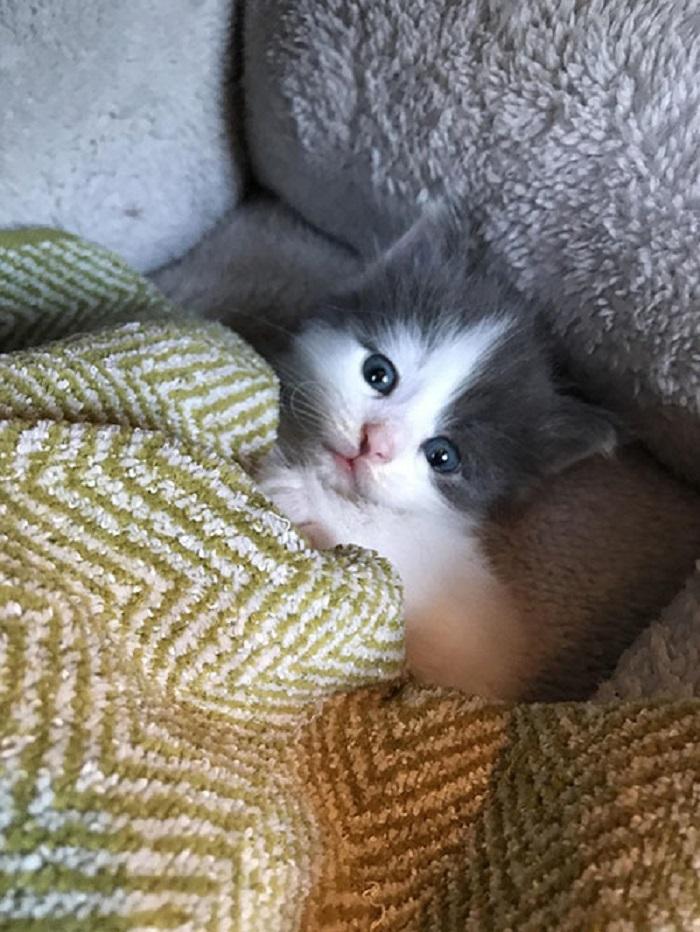 cucciolo coperta freddo