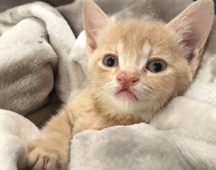 piccolo gattino foto