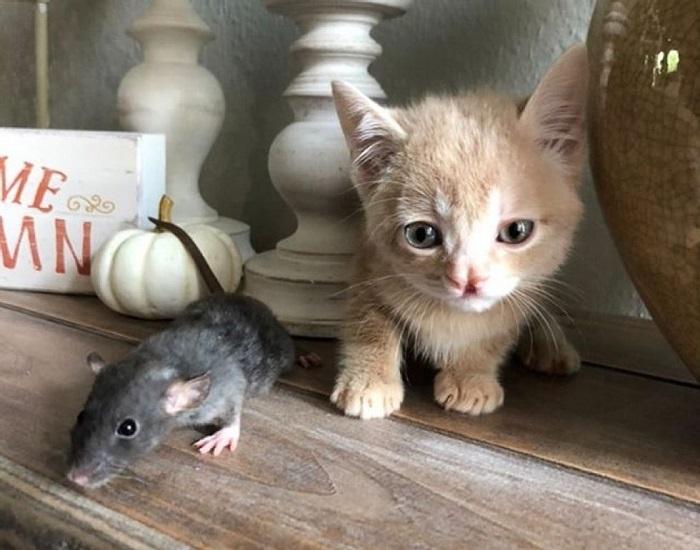 gatto topo amico