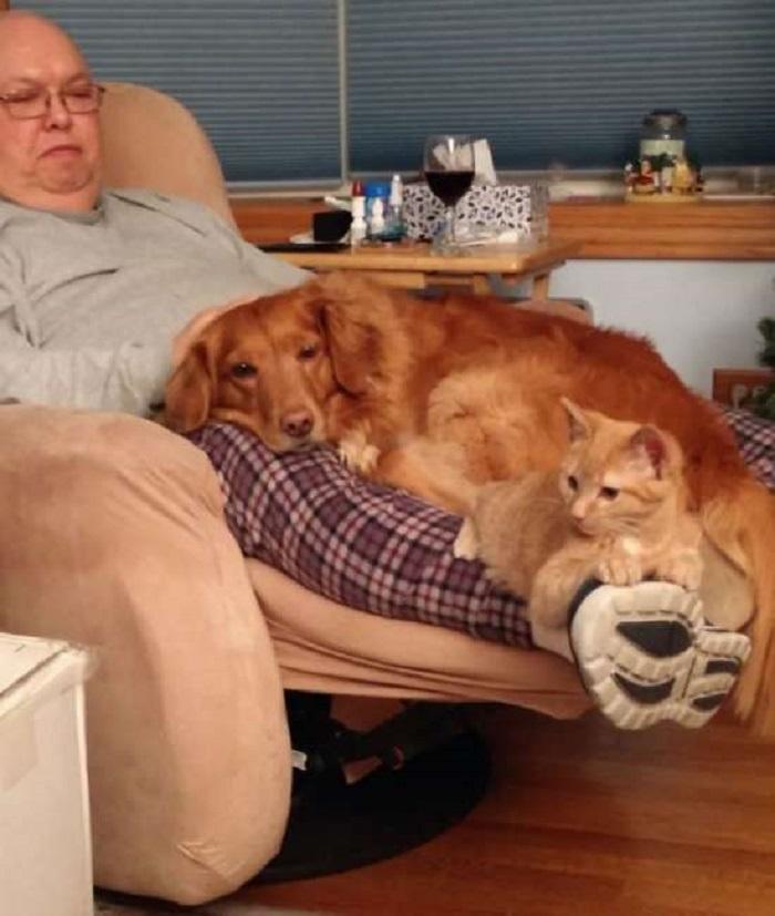 riposo gatto cane