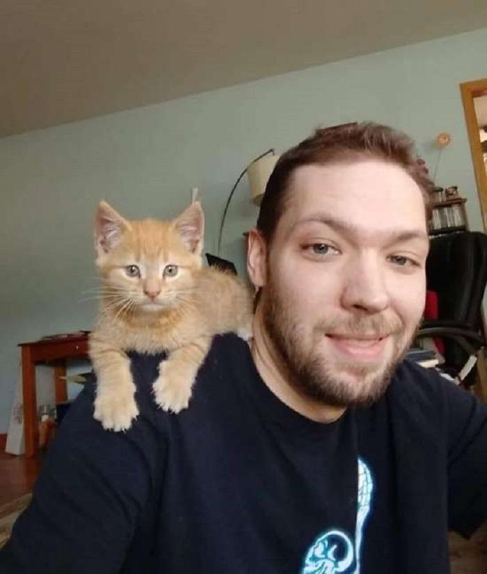 michael gattino amico
