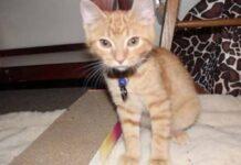 ares gattino sorellina