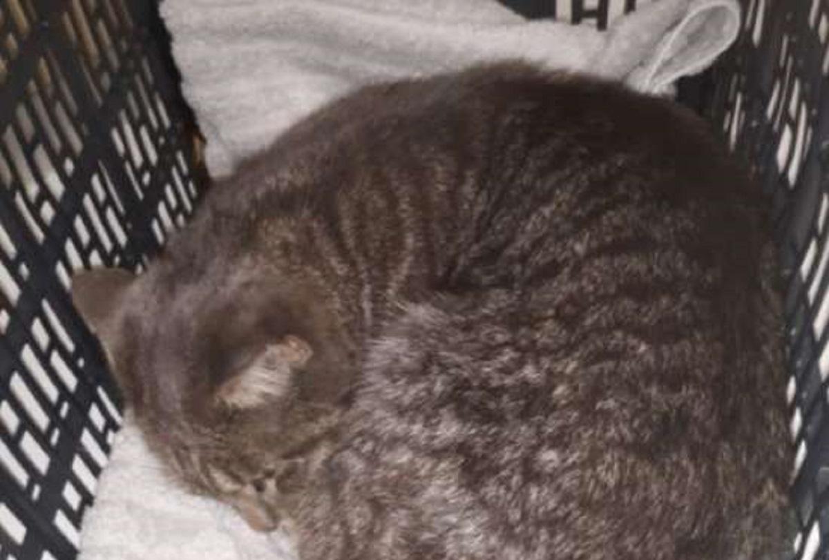 soccorso gattina salvata