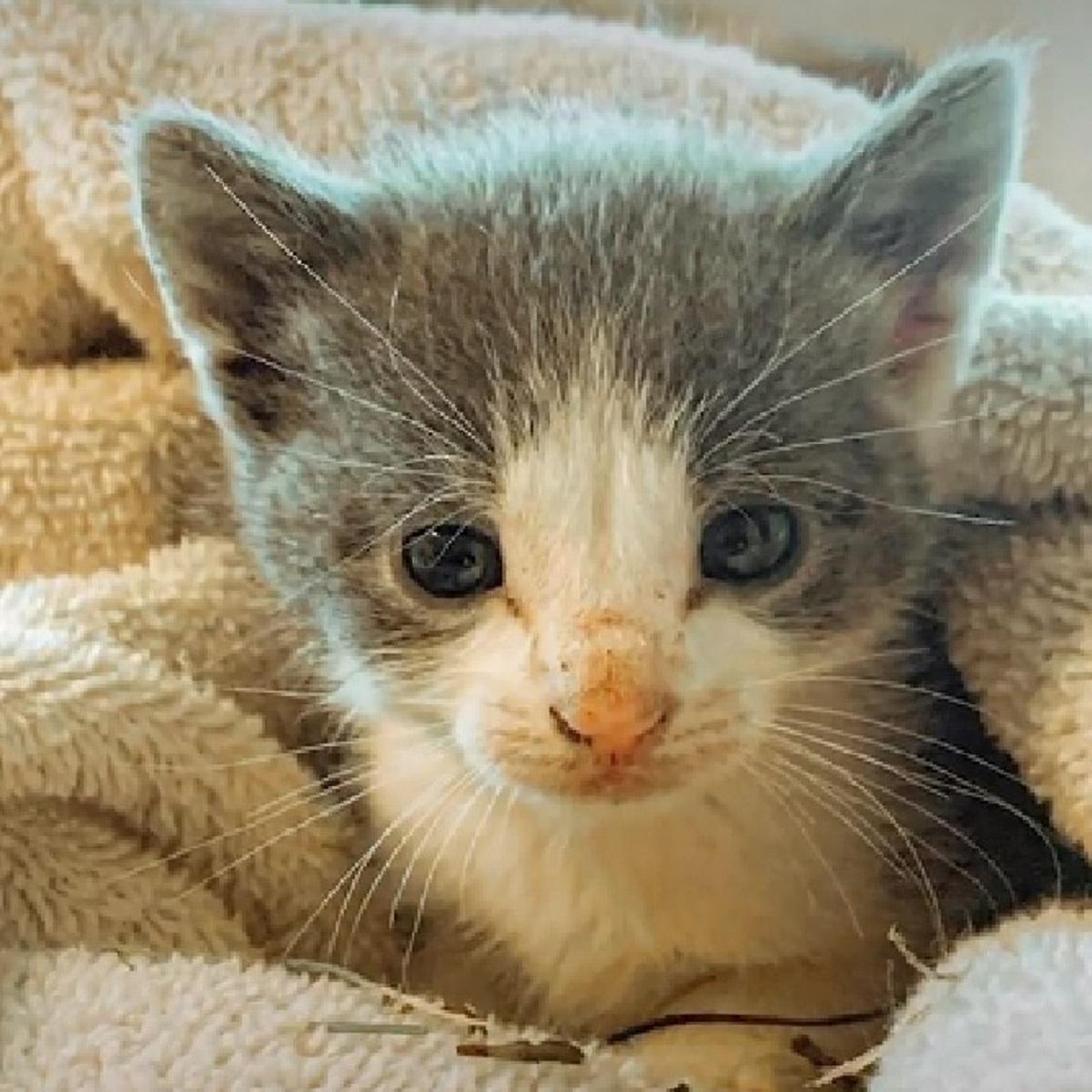 leo gatto carica positiva proprietario