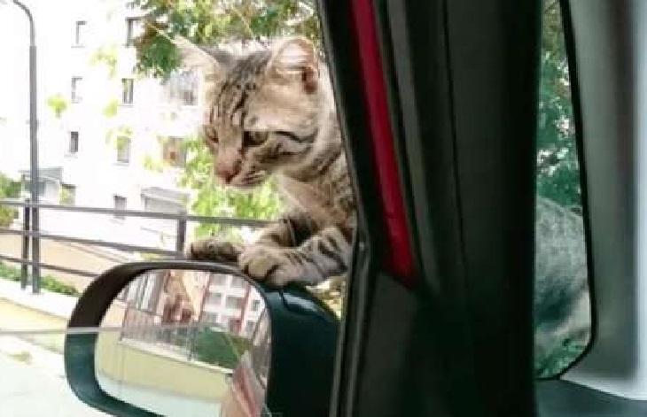 leo gattino modifica suo futuro