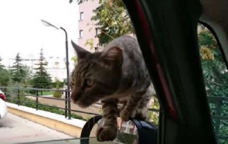leo gattino randagio turchia