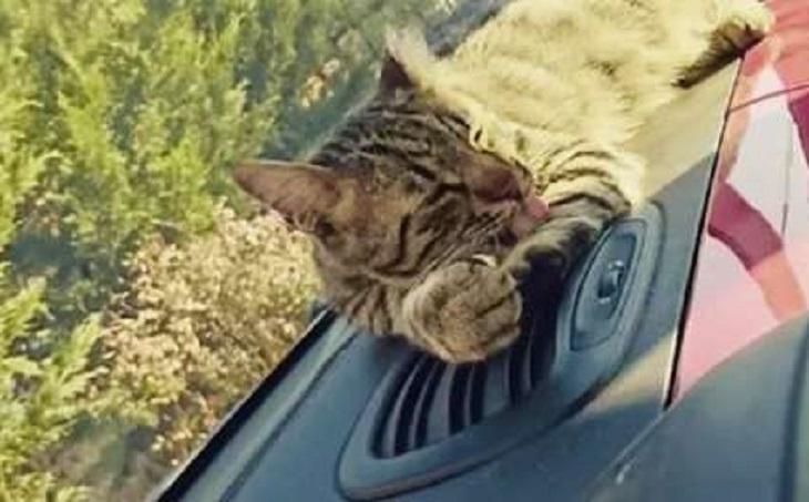 leo gattino entra auto bercu