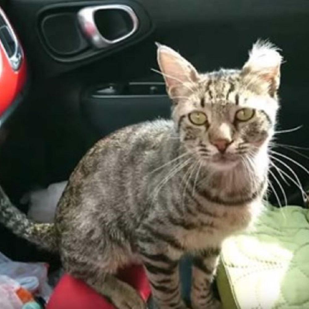 leo gatto trova casa yugmur