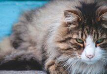 come capire se il gattino è arrabbiato