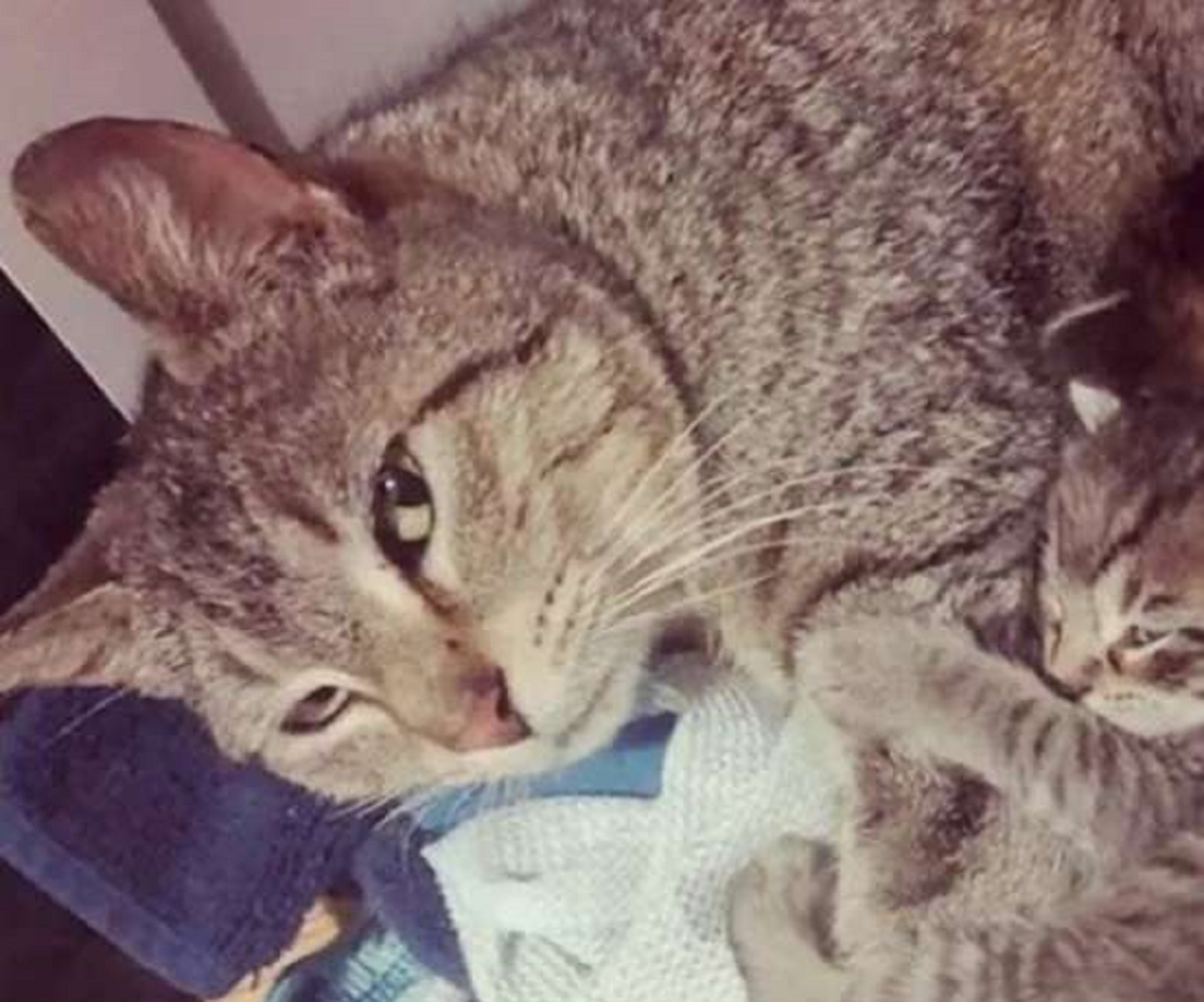 magnolia gatta piccoli trovano famiglia