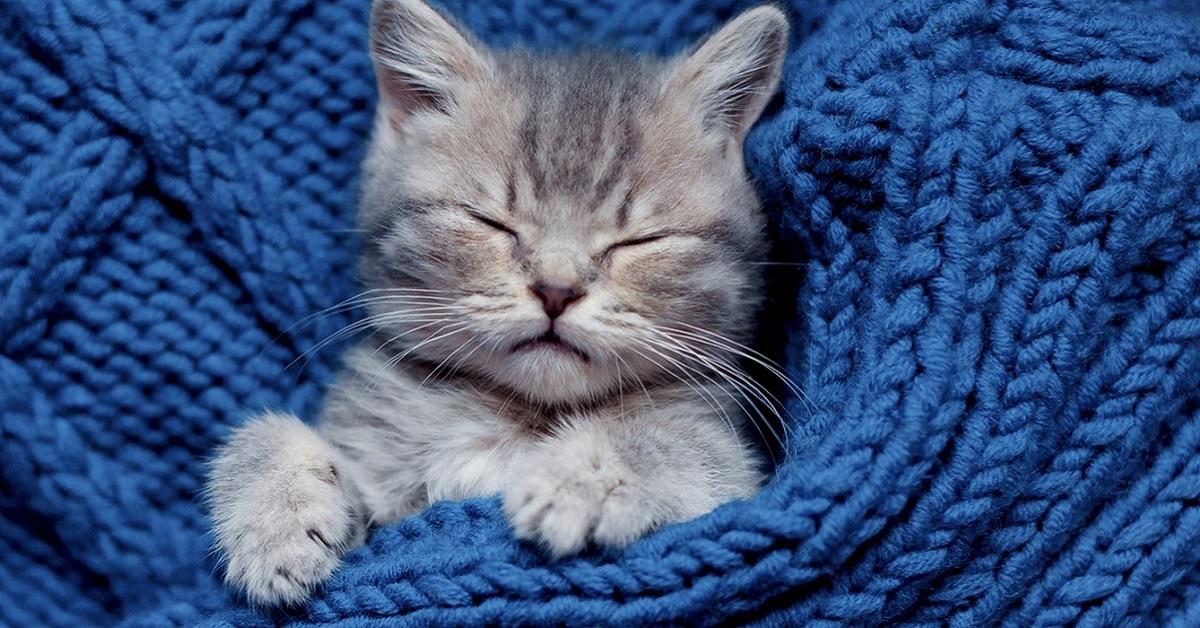 gattino in maglione di lana