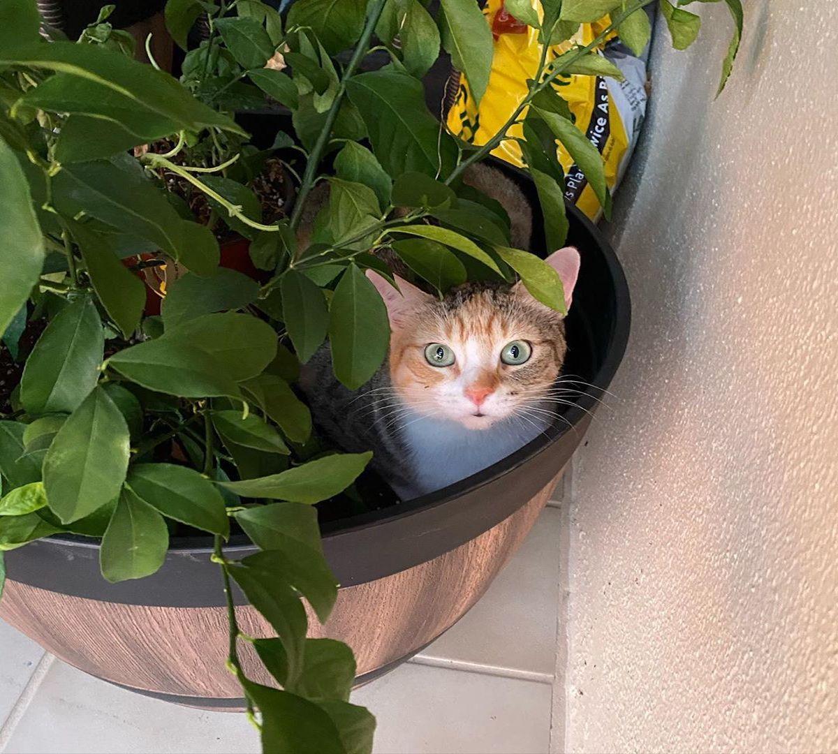 manx dentro la pianta