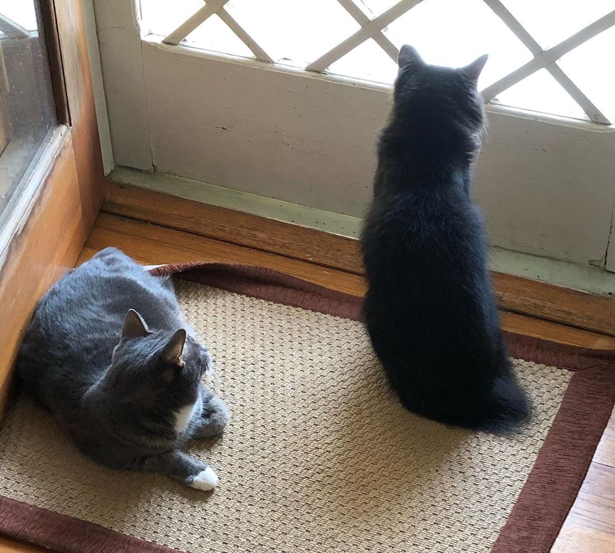 gatti affacciati alla finestra