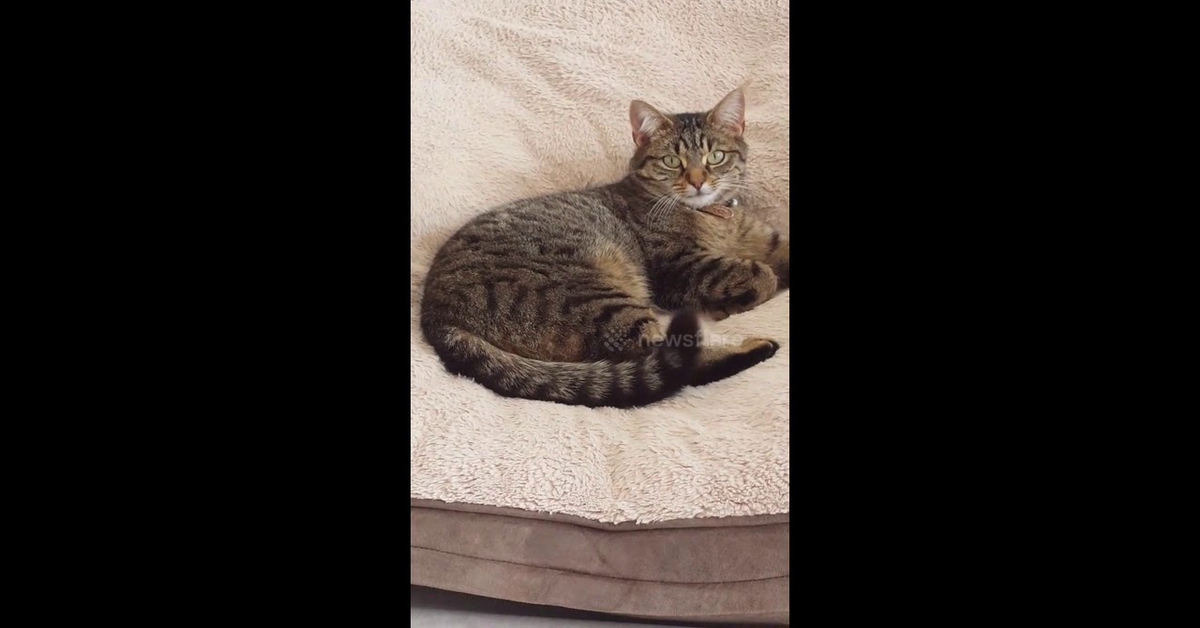 gatto Indie cuccia