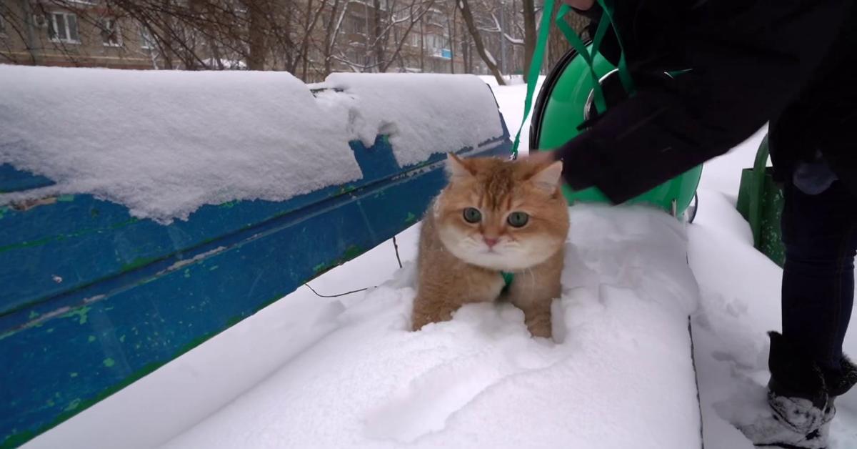 Hosico scopre la neve