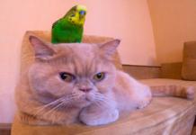 gatto che dorme e pappagallo che si avvicina