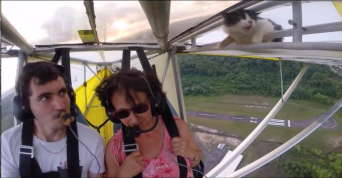 micio sul deltaplano, pilota e passeggera