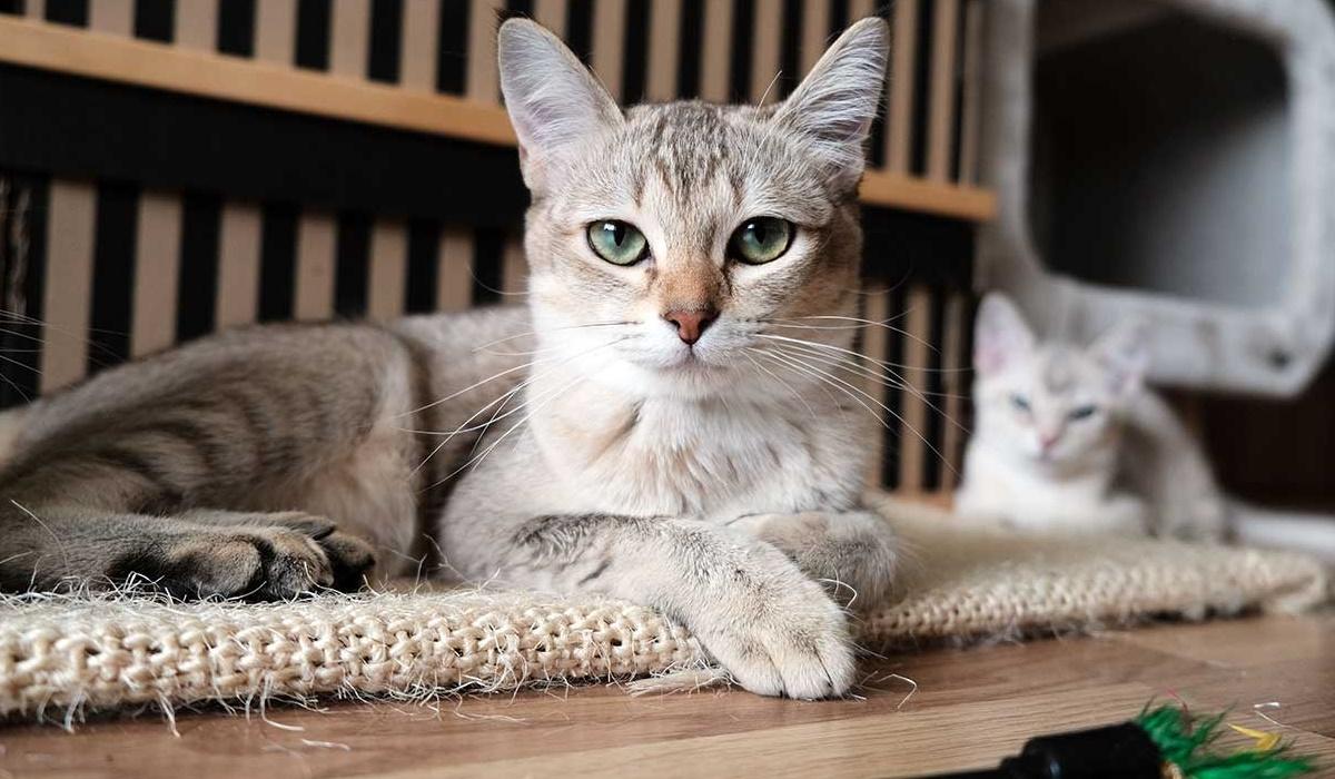 gatto con lo sguardo infastidito