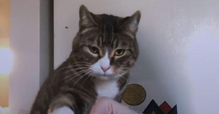 milo gatto più affettuoso del mondo