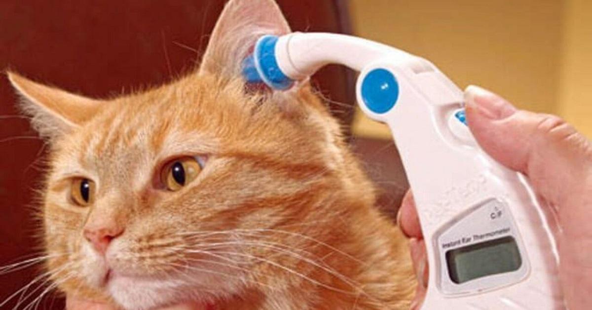 termometro per l'orecchio del gatto