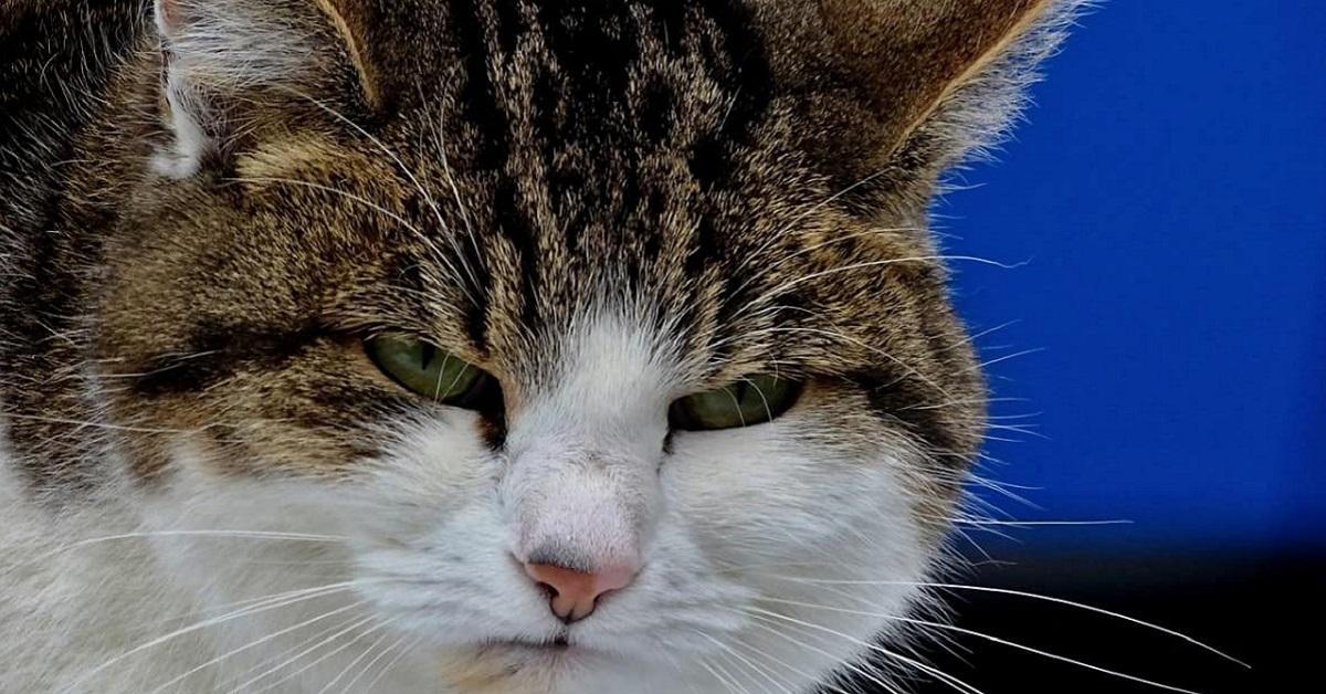 gatto debole e con occhi socchiusi