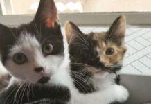 naomi sushi gattini inseparabili trovano casa