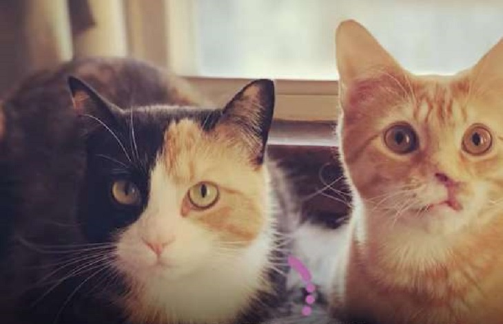 nigel gattino serenità casa
