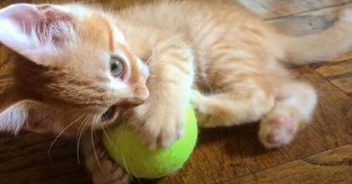nigel gattino senza naso trova casa sogni