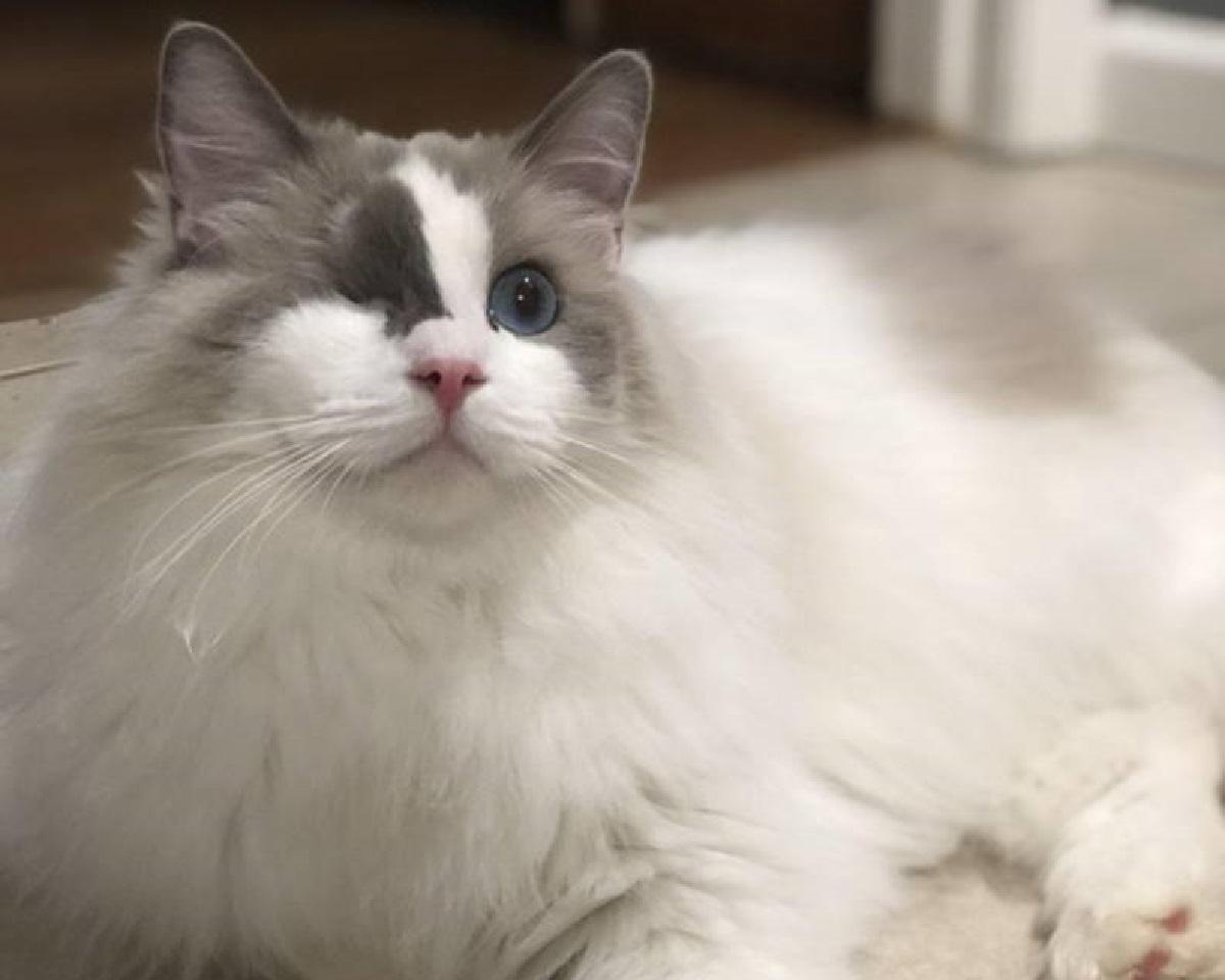 odin gattino restituito rifugio