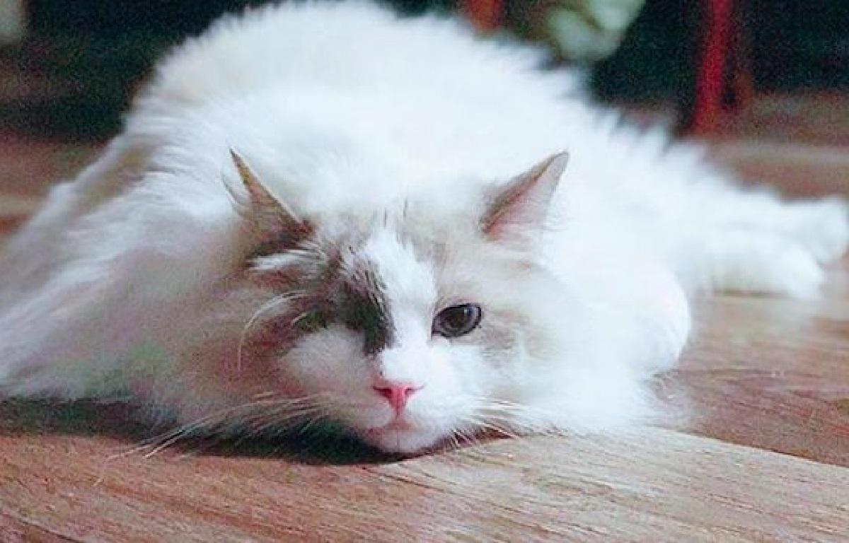 odin gattino lotta contro infezione