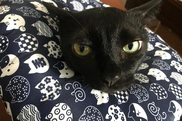 gatto convalescente