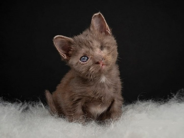 paloma gatta adozione julieta