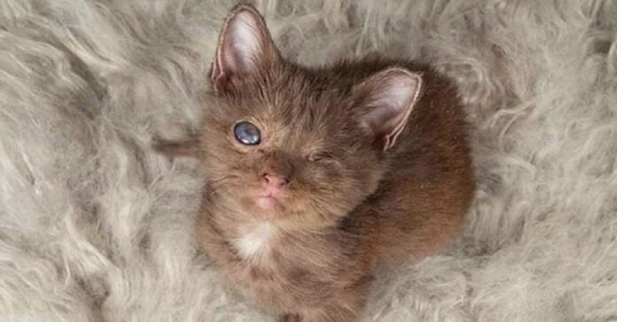 paloma gattina senza occhio salvata container