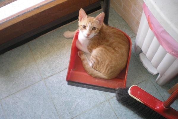 scopa e paletta con gatto