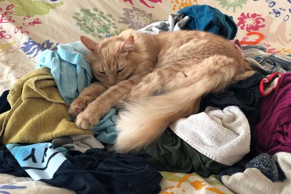 gatto dorme sulla biancheria