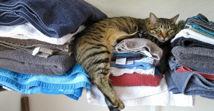 gatto che dorme sui vestiti
