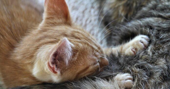 gattino che allatta