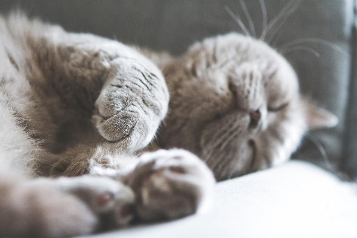 gatto dorme su un fianco