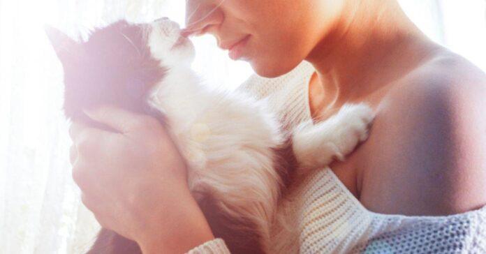 naso contro naso con il gatto