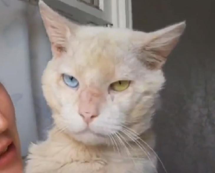 phoenix gatto salvataggio san bernardino