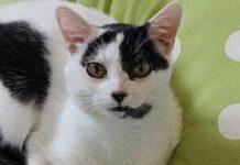pierre il gatto di16 anni viene finalmente adottato