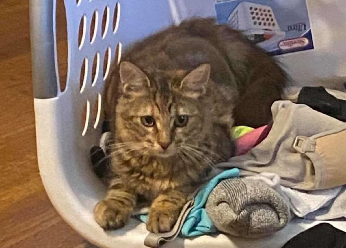 gattino cesta foto