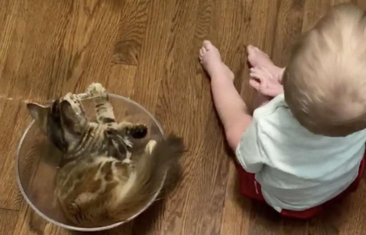 amicizia bimbo gatto