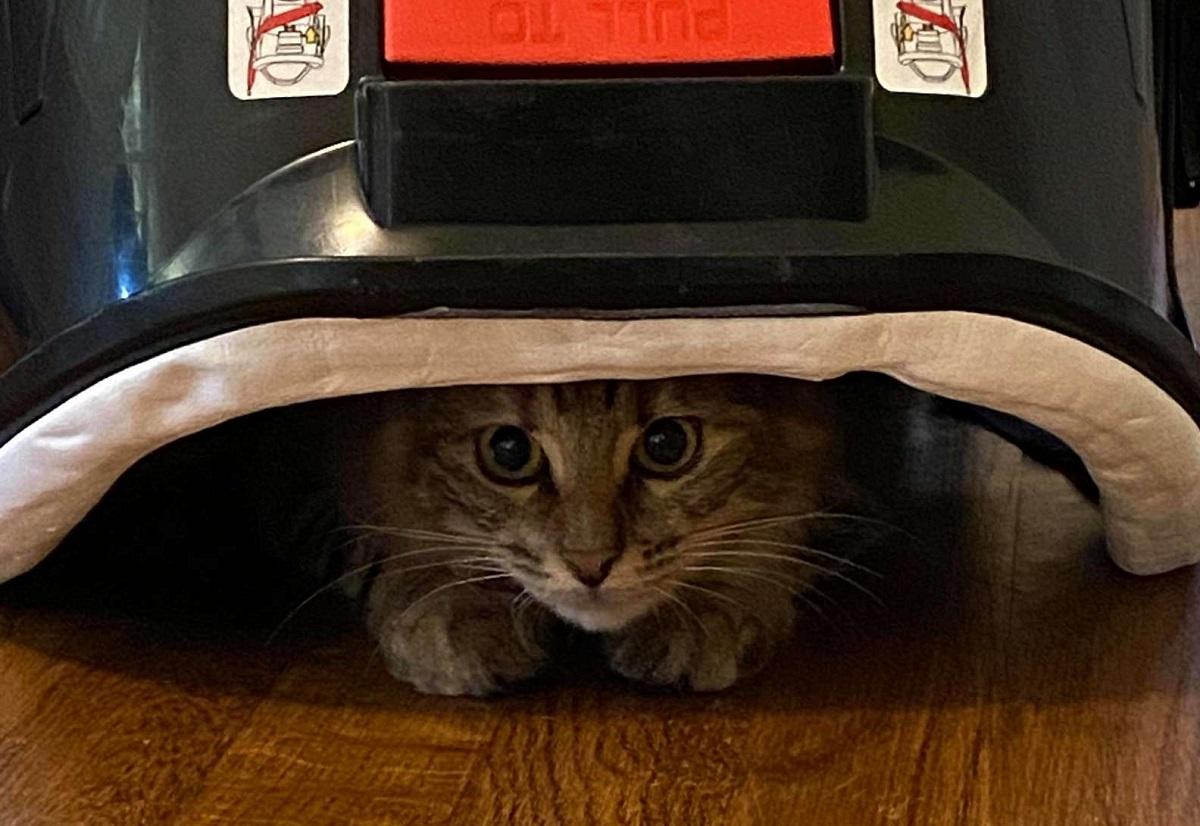 gattino nascondiglio foto