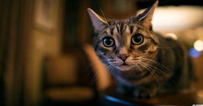 potato gatto armadio