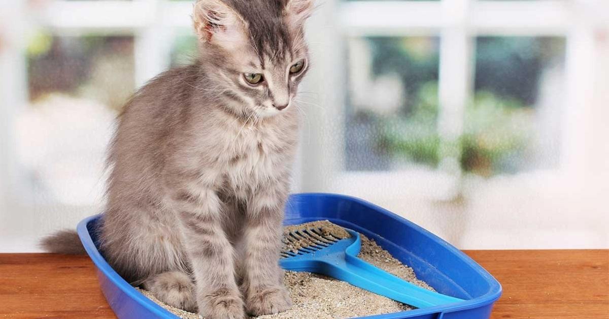 gattino fa i bisogni