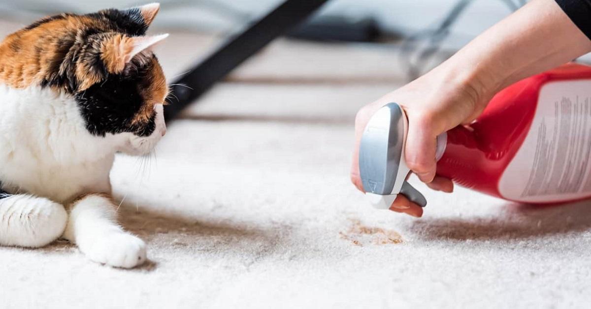 rimuovere macchia del gatto dal tappeto