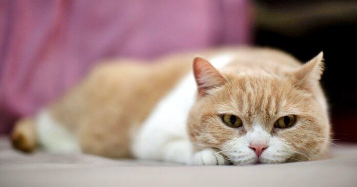 gatto triste e infelice